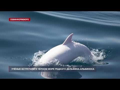 Учёные встретили в Чёрном море редкого дельфина-альбиноса