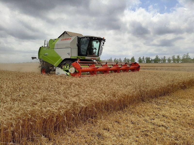 Крымские аграрии уже убрали 214 тысяч гектаров из общей посевной площади
