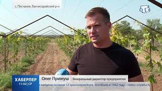 Помощь виноградарям