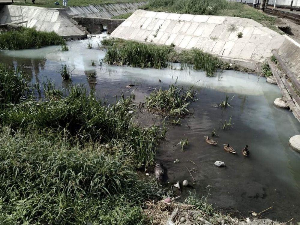 Из-за слива отходов в Симферополе гибнут животные