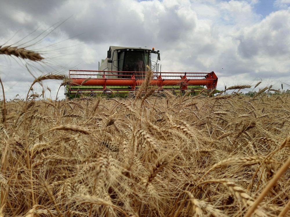 В Крыму аграрии уже собрали 500 тысяч тонн зерна