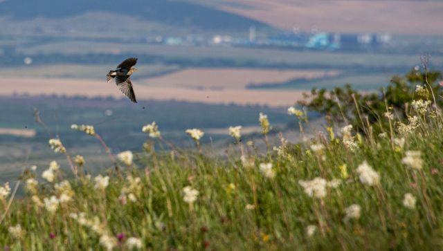 Сухо и тепло: какой погоды ждать в Крыму в субботу