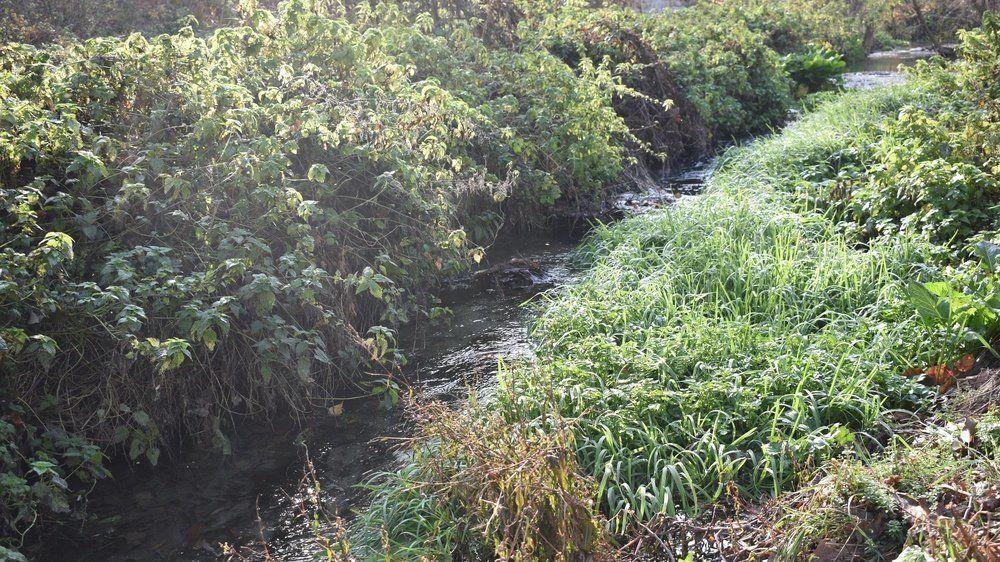 Минприроды Крыма в связи с поступающими обращениями по вопросу загрязнения реки Славянка в г. Симферополе разъясняет