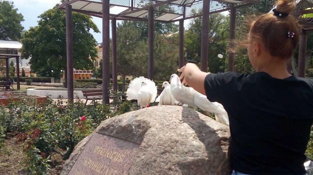 В Феодосии активизировались фотографы с голубями
