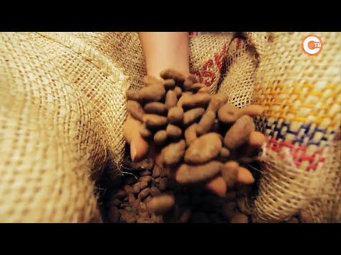 В эко-парке «Лукоморье» отметили всемирный день шоколада (СЮЖЕТ)