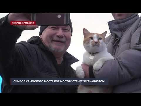 Символ Крымского моста кот Мостик меняет профессию