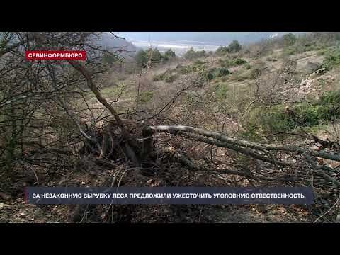 Уничтожившая можжевеловый лес в селе Родное фирма остаётся безнаказанной