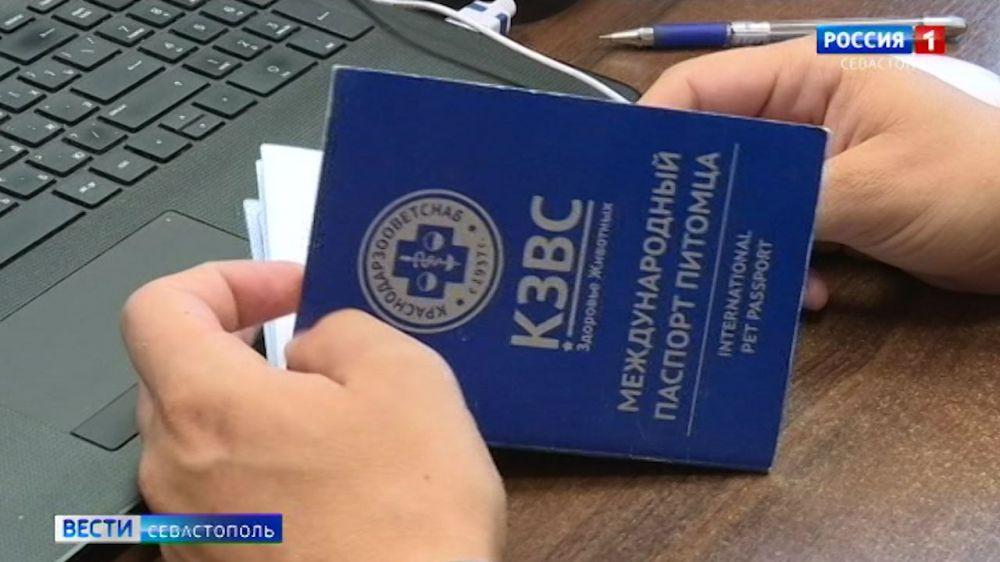 Паспорт, клеймо или чипирование – что необходимо домашнему питомцу