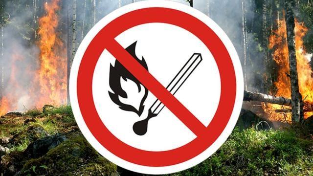 В Крыму еще на 3 недели продлили запрет на посещение лесов