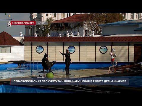 Севастопольская прокуратура нашла нарушения в работе дельфинариев