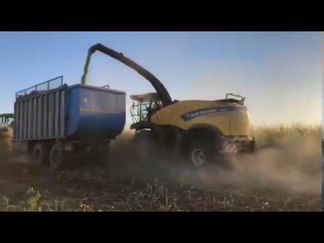 В Крыму заготовили первые 5 тысяч тонн силоса