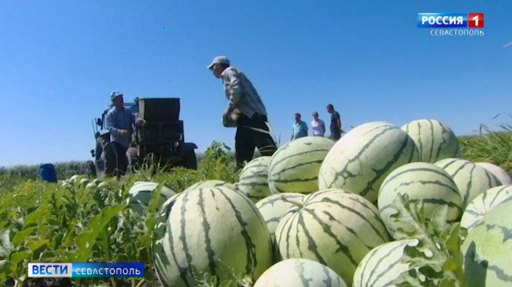 Когда в Севастополе снизятся цены на арбузы и дыни
