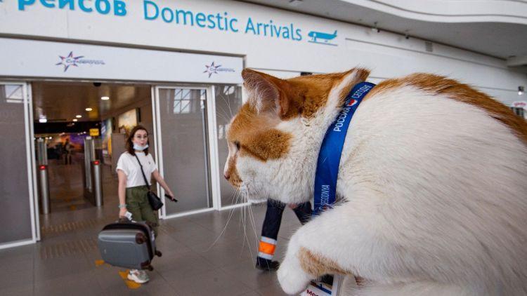 Туристов в аэропорту Симферополя встретил кот Мостик