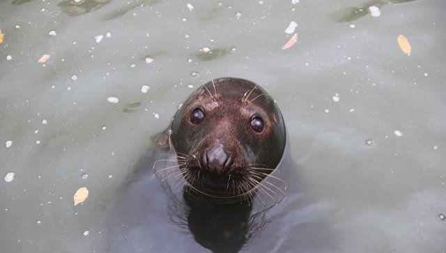 """В """"Тайгане"""" зверям не хватает воды: тюленя передали в Геленджик"""