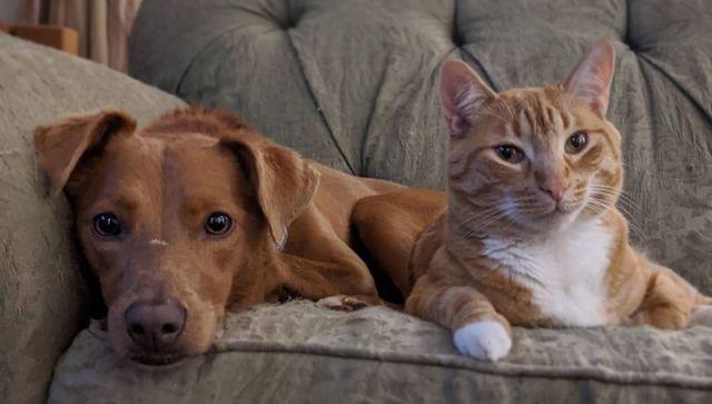 Как кошка с собакой: необычные друзья умилили интернет