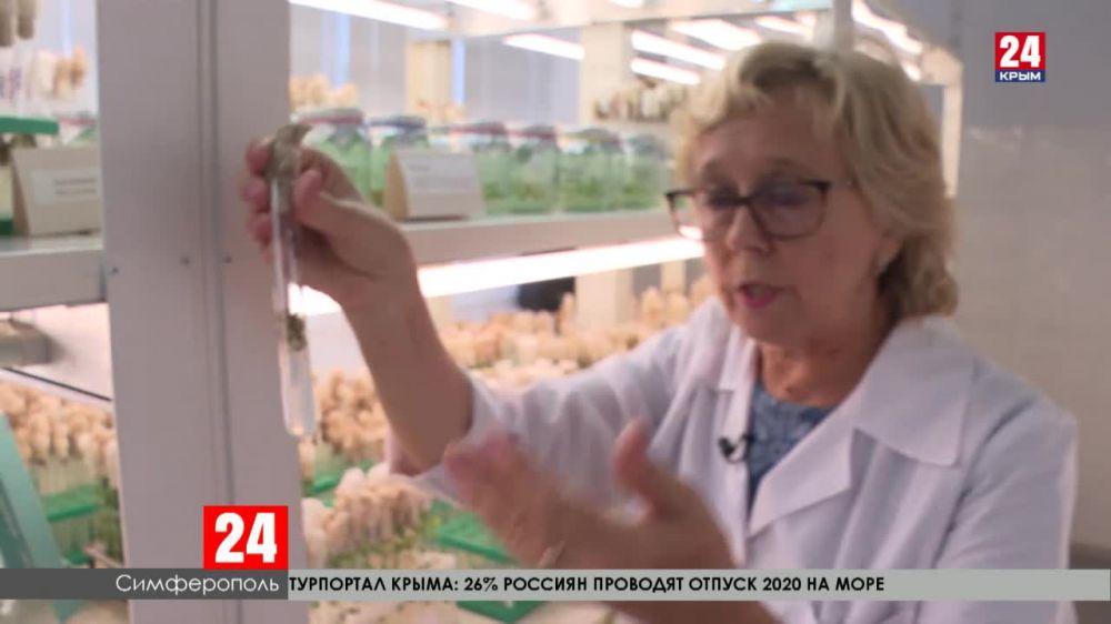 Учёные Крыма работают над получением новых генотипов растений