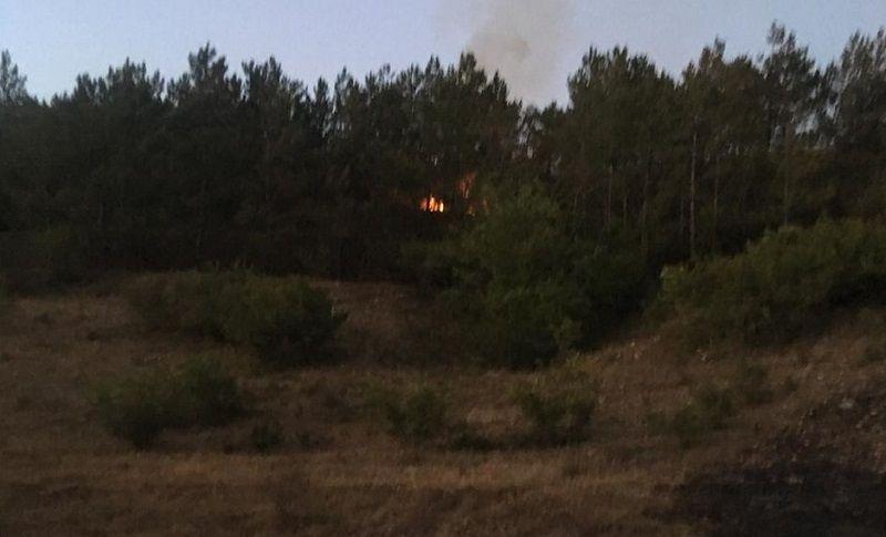 В Бахчисарайском районе лесной пожар тушили двое суток