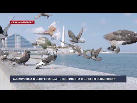 Биоакустика в центре города не повлияет на экологию Севастополя