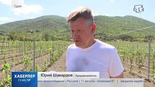 30 гектаров виноградника заложили под Судаком крымские предприниматели
