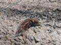 Крымчанин спас кабанчика, застрявшего в грязи