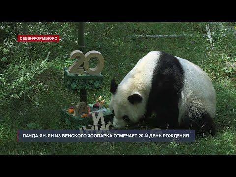 Панда Ян-Ян из Венского зоопарка отмечает 20-й день рождения