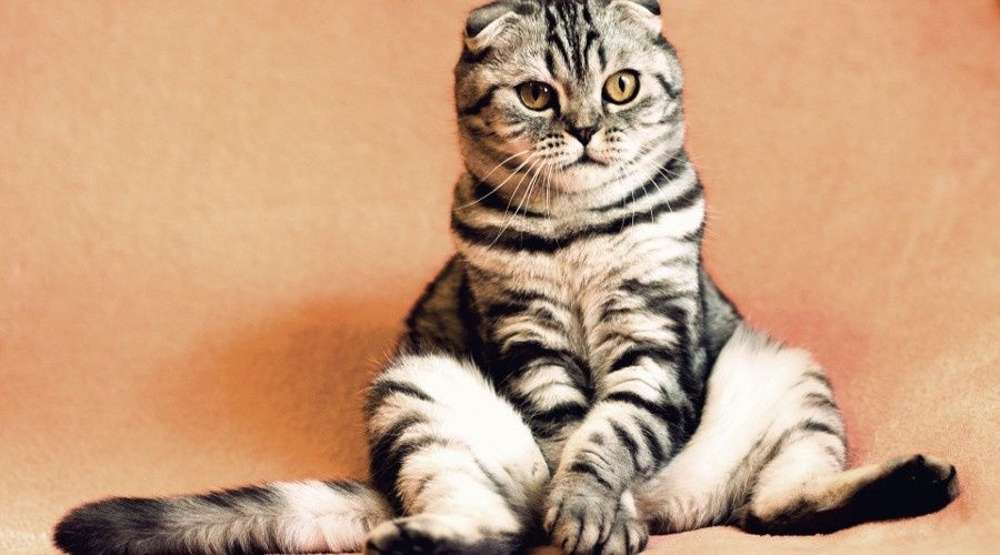 Российские законодатели запретят изымать домашних животных за долги граждан