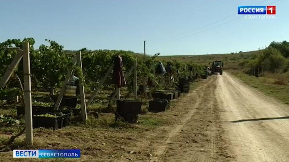 Севастопольское вино может подорожать