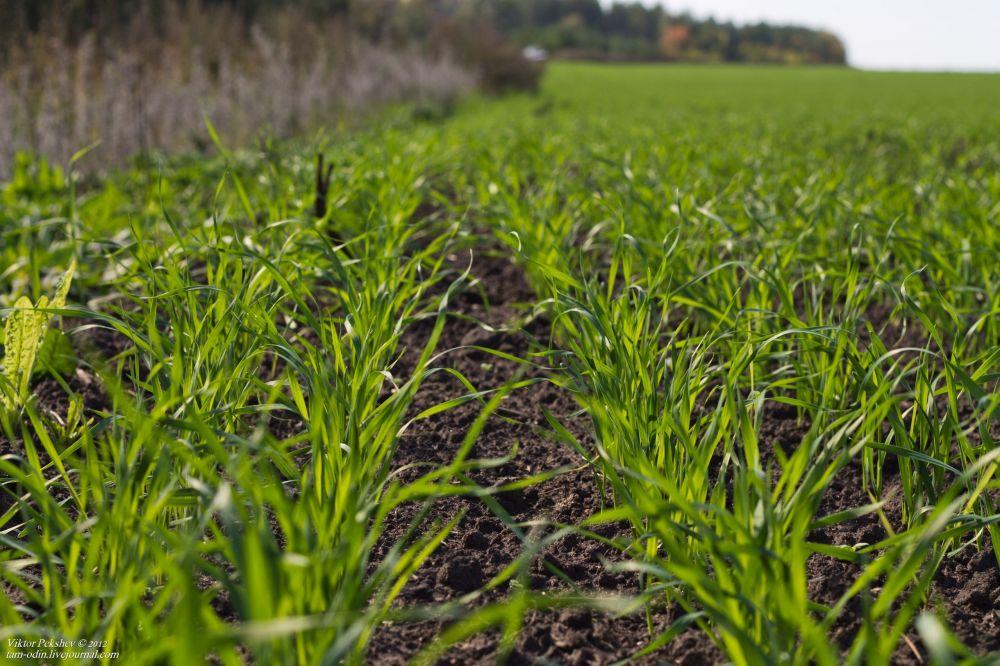 500 тысяч гектаров засеют в Крыму озимыми