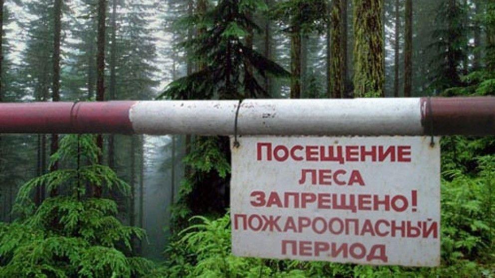 Сергей Шахов: Минприроды Крыма продлило ограничение пребывания граждан в лесах и въезда в них транспортных средств