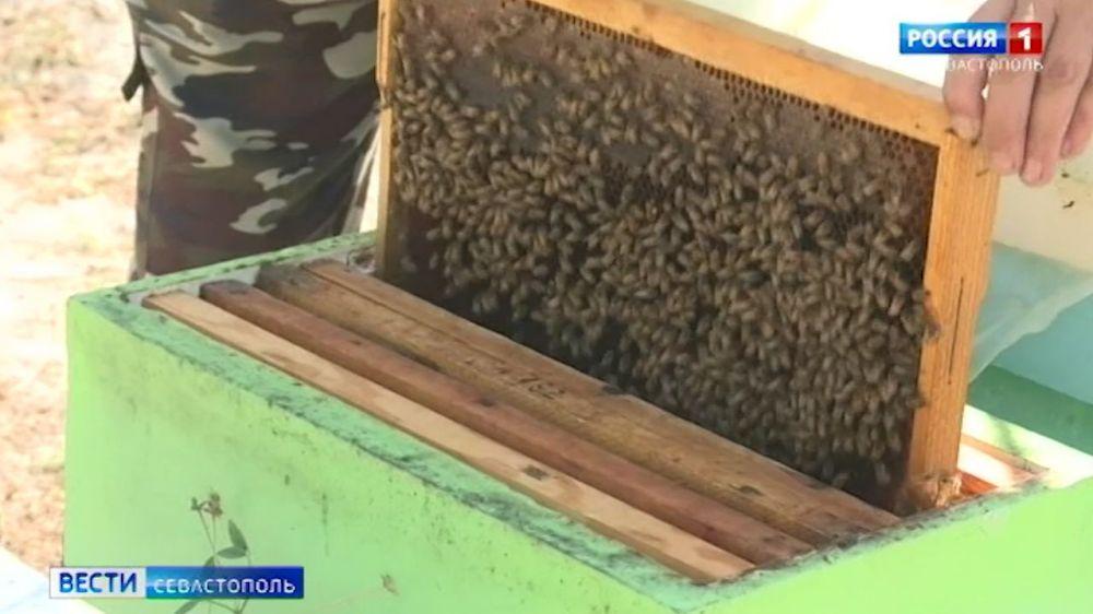 На севастопольских пасеках завершают сбор мёда