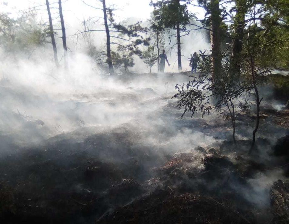 В Крыму за сутки ликвидировали 15 пожаров
