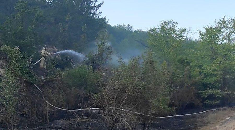 Полтора гектара сухостоя выгорело в лесу под Севастополем