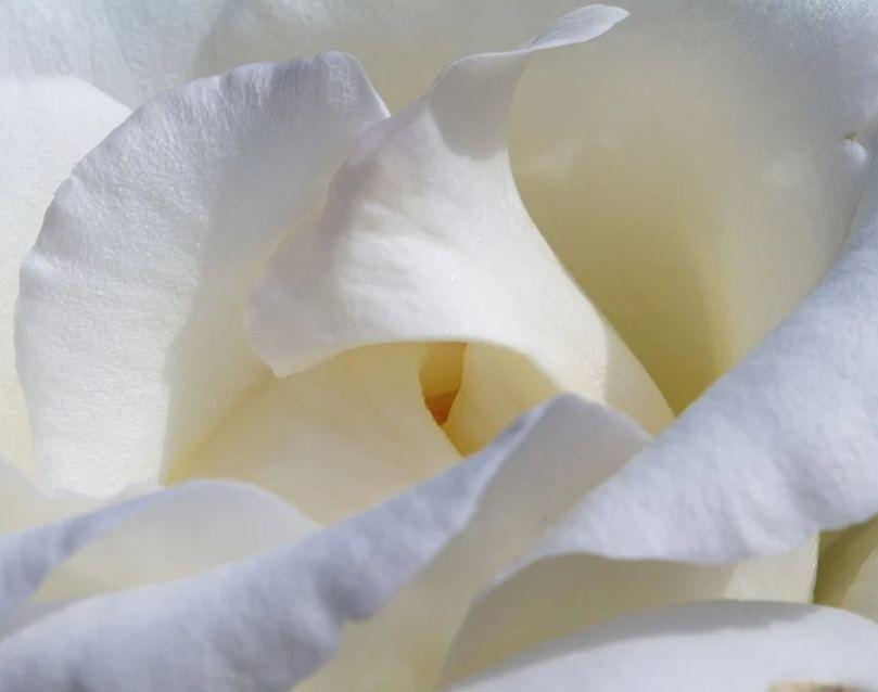 В Евпатории на благотворительной акции «Белый цветок» собрали 900 тысяч рублей