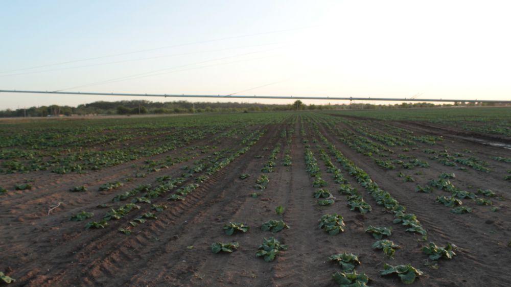 Андрей Рюмшин назвал своевременным принятый в первом чтении законопроект об особо ценных продуктивных сельхозугодьях