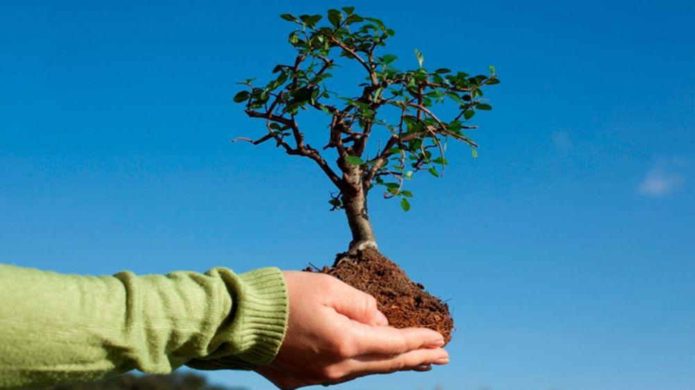 Минприроды Крыма приглашает принять участие в высадке деревьев в Новофедоровском сельском поселении Сакского района