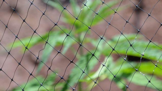 В Феодосии правоохранители задержали наркодачника