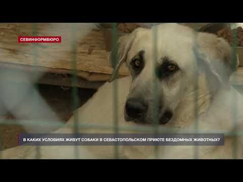 В каких условиях живут собаки в Севастопольском приюте бездомных животных