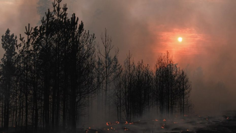 Сергей Шахов: Ландшафтные пожары представляют реальную угрозу для населения