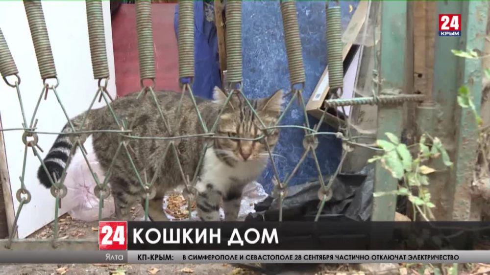В Ялте под окнами многоэтажки на улице Дзержинского поселились десятки усатых и хвостатых