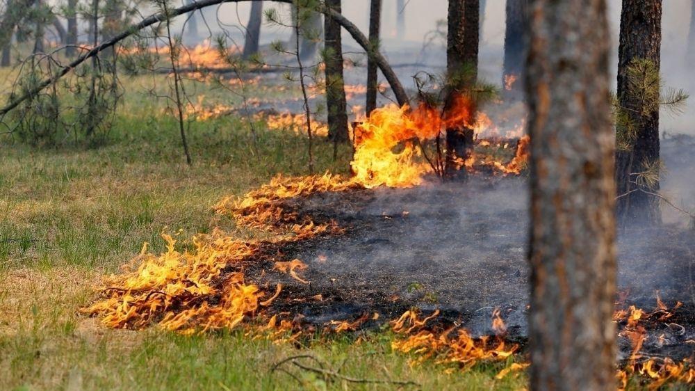 МЧС Крыма: За прошедшие сутки в Республике ликвидирован 1 природный пожар