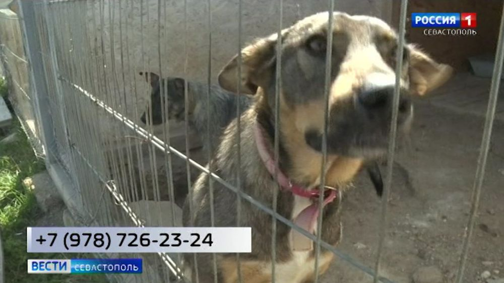 В Севастополе волонтеры помогают бездомным животным онлайн