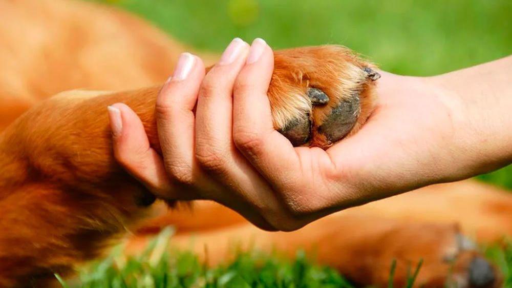 Во Всемирный день защиты животных Минприроды Крыма призывает к бережному отношению к животным