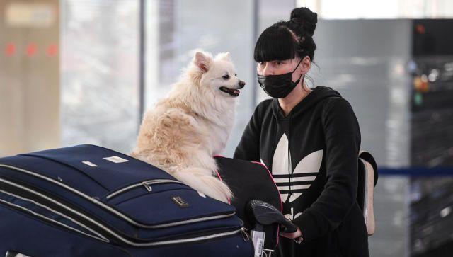 Собаки смогут выявлять коронавирус у человека по выделению адреналина