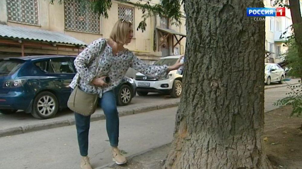 В Севастополе стартовала осенняя кампания по обрезке деревьев