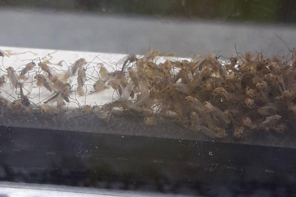 «Аномалий все больше»: Жителей Крыма атакуют «беззубые» комары из Краснодара