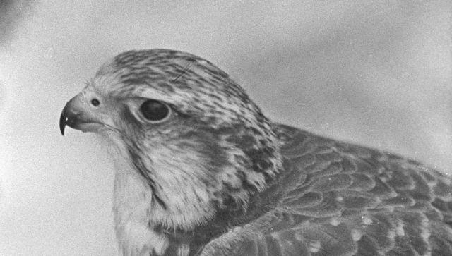 Крымчанину грозит тюрьма за незаконное содержание птиц