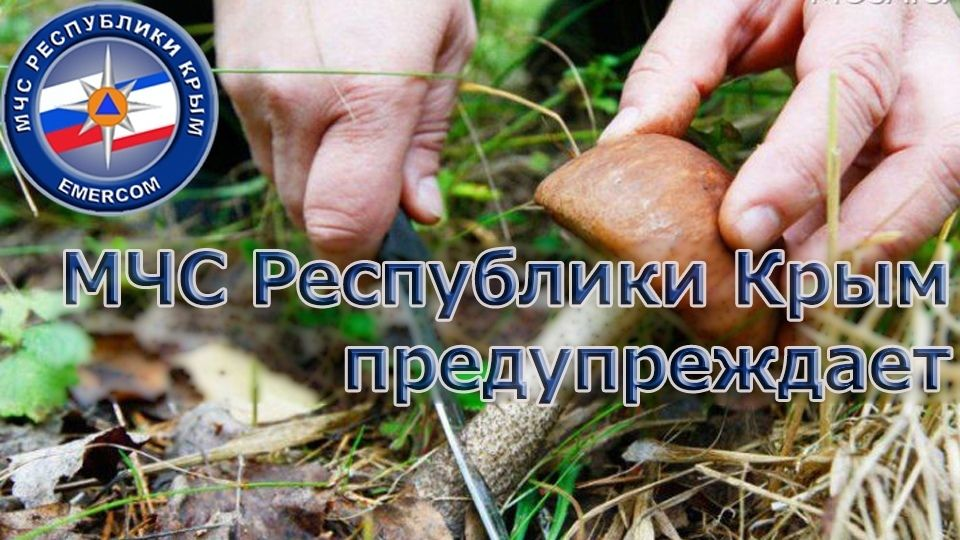 МЧС Крыма: Будьте осторожны и внимательны при сборе грибов!