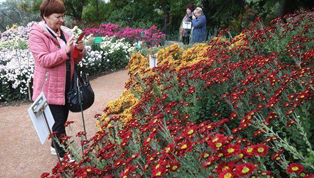Никитский ботсад в Крыму представил рекордную коллекцию хризантем
