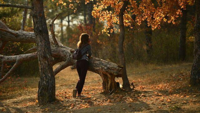 Любуемся лесом без риска: пять правил осенних походов в Крыму