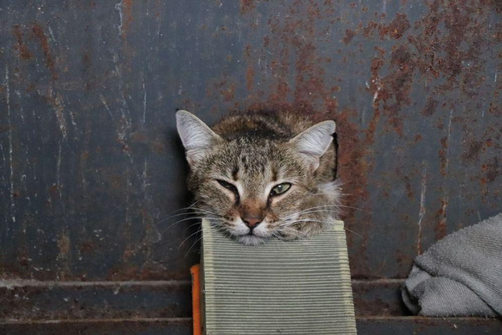 В Севастополе спасли кота, застрявшего в электрощитовой